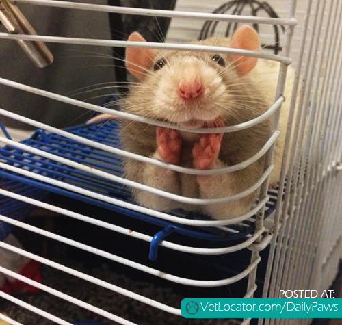 And people say rats can't be cute...