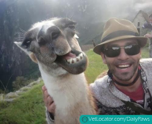 Funny-animals-human-selfies-01