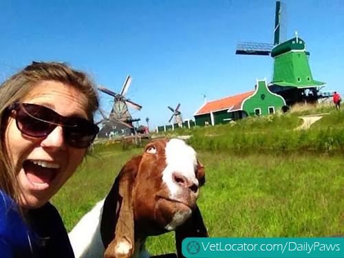 Funny-animals-human-selfies-04