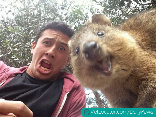 Funny-animals-human-selfies-09