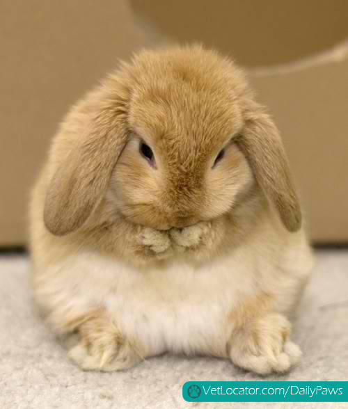 adorable bunny