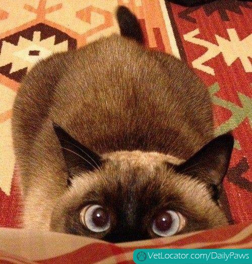 crazy-eyes