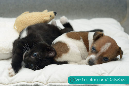 puppy-kitten-best-friends-02