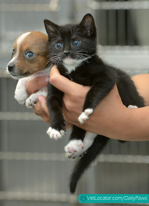 puppy-kitten-best-friends-04
