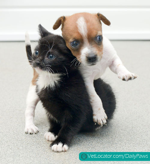 puppy-kitten-best-friends-06