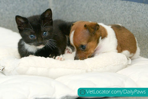 puppy-kitten-best-friends-11