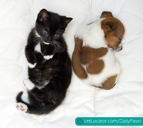 puppy-kitten-best-friends-12