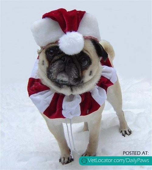 Christmas Santa Pug
