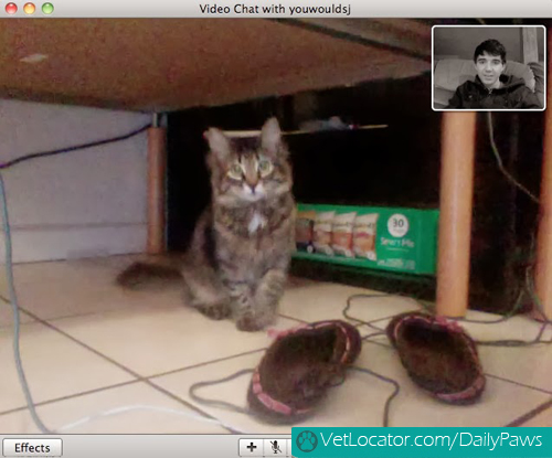 Cat-owner-video-chat-01