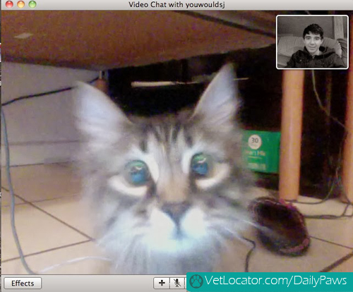 Cat-owner-video-chat-02