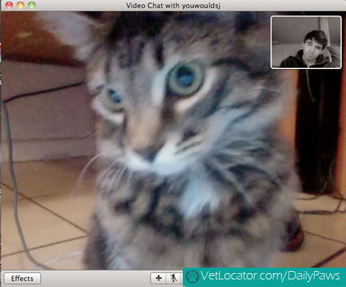 Cat-owner-video-chat-03