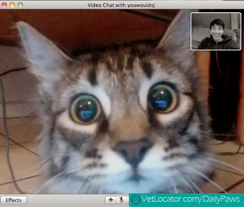 Cat-owner-video-chat-04