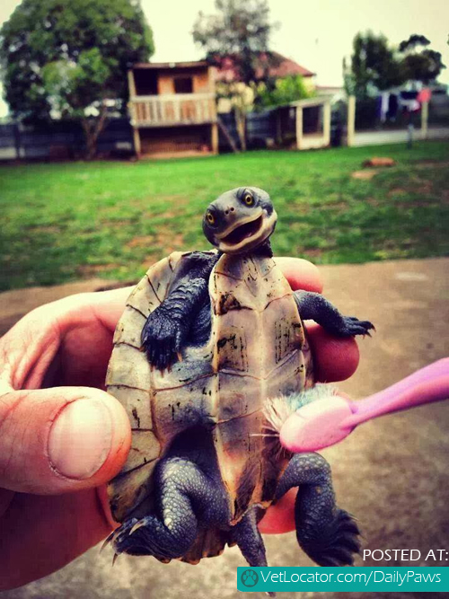 tickling-a-turtle