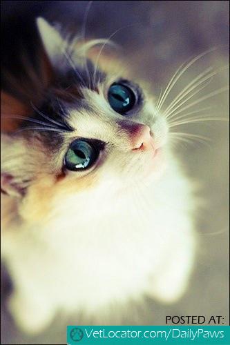 Eyes of Wonder Fluff