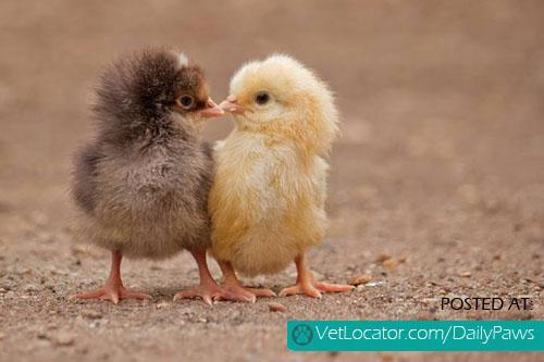 I peck you