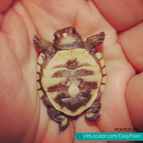 Precious little turtle
