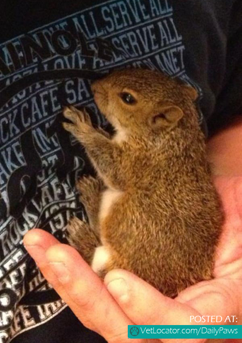baby-squirrel-found-in-a-bag-of-mulch-06