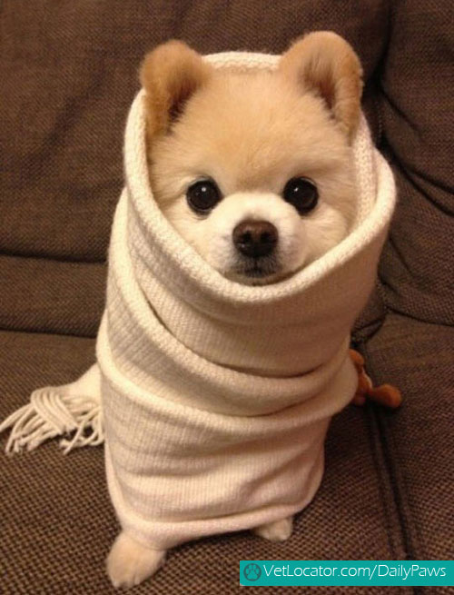 adorable-animals-wrapped-like-burritos-07