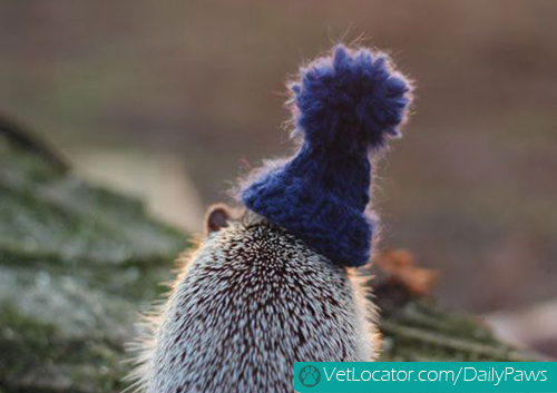 hedgehog-with-hat-02