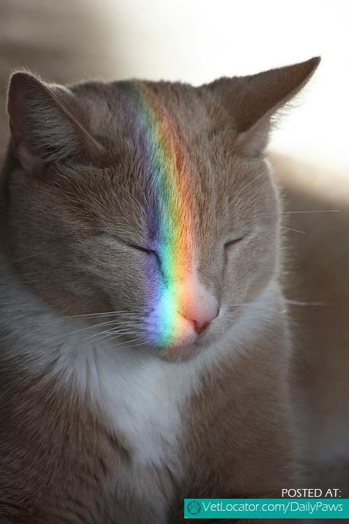 See Rainbows
