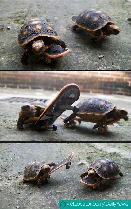 tortoises skateboarding.
