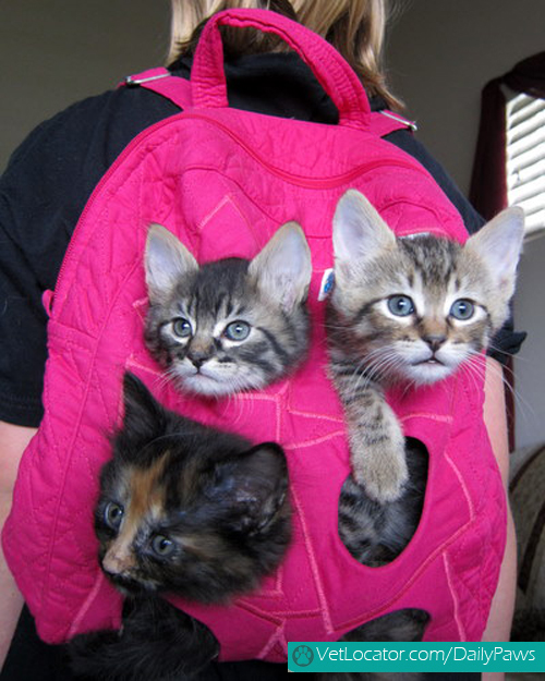 adorable-back-to-school-pets1