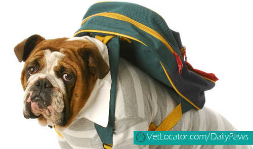 adorable-back-to-school-pets3