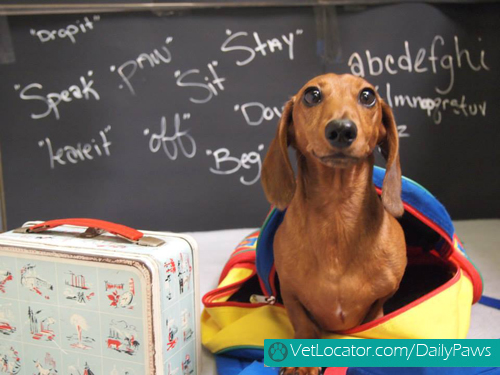 adorable-back-to-school-pets4