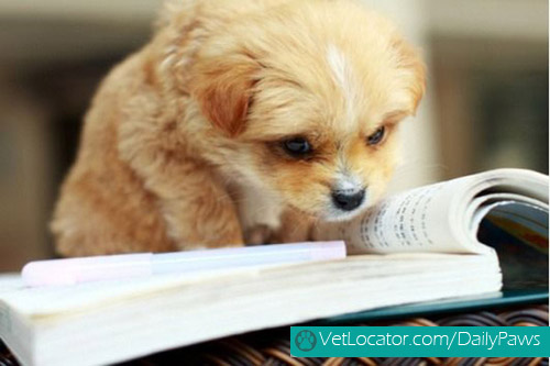 adorable-back-to-school-pets5