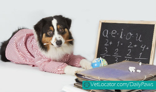 adorable-back-to-school-pets6