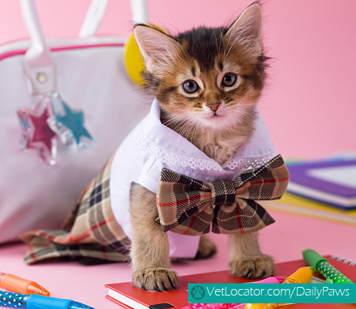 adorable-back-to-school-pets9