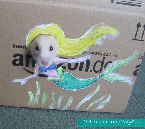 dress-up-hamster