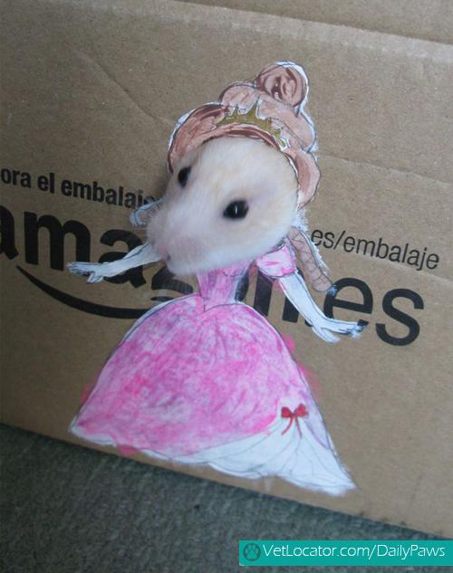 dress-up-hamster2