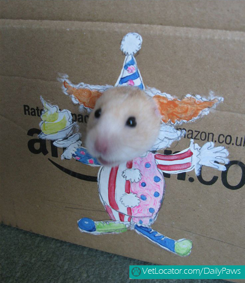 dress-up-hamster3