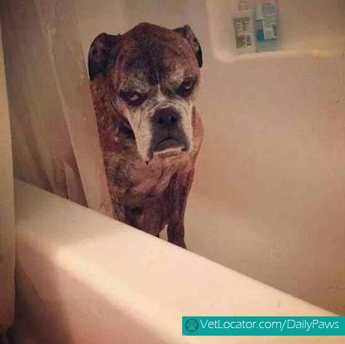 grumpy-dogs-11