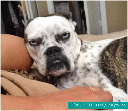 grumpy-dogs-13