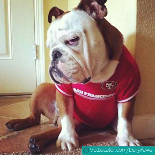 grumpy-dogs-16