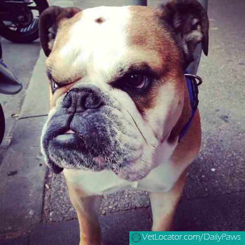 grumpy-dogs-2
