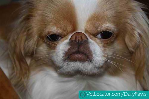 grumpy-dogs-9