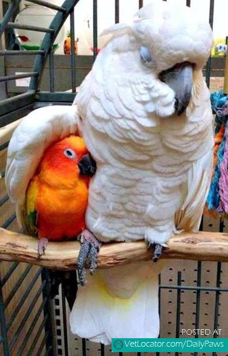 Parrots Showing Love