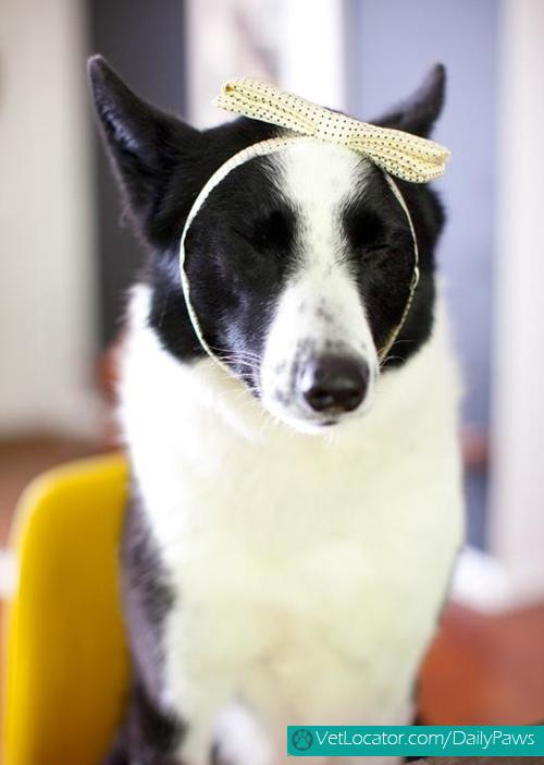 dogs-rockin-white-04