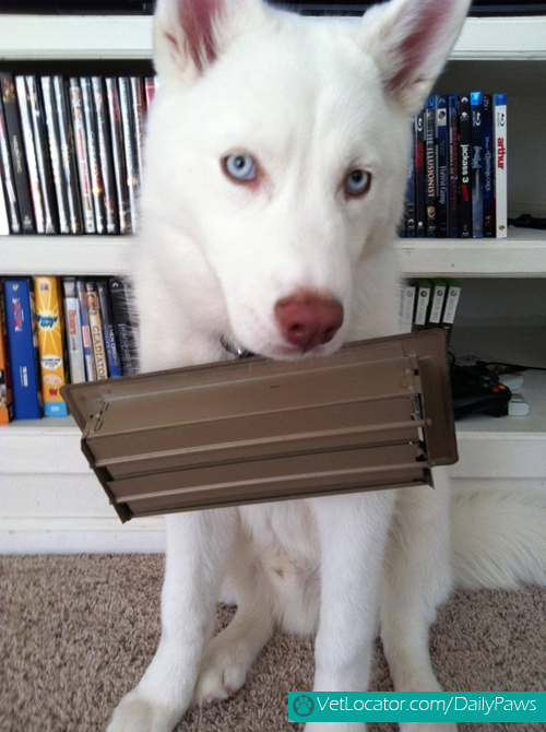 dogs-rockin-white-05