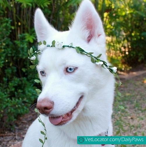 dogs-rockin-white-06