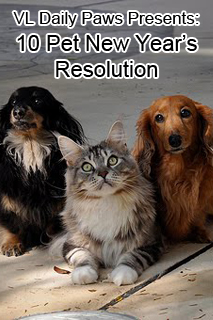 Vetlocator Com Daily Paws Resolve To Give Your Pet The